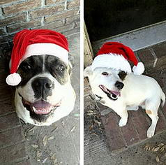 We Woof You A Merry Christmas!