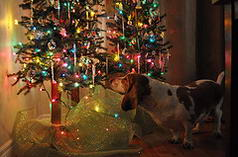 checking for presents