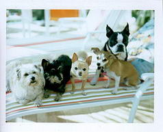 all 5 dogs!