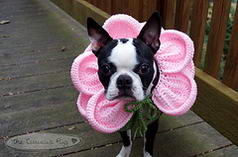 Blooming Dog Petal Collar
