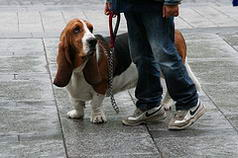 Basset hound and Nike sneakers
