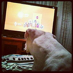 daley watching tv feb 2013