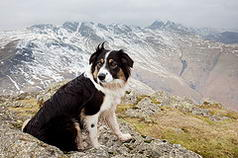 MOLLYS FIRST WAINRIGHT   PIKE O BLISCO